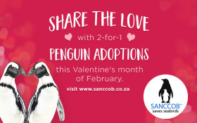 This Valentine's Day share the love, adopt a penguin