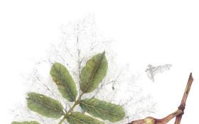 Wild Harvest Botanical Art Exhibition