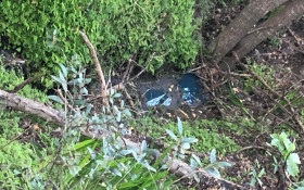 Is raw sewage being pumped into the Glen Forest in Camps Bay?