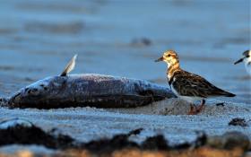 Toxic 'red tide' killing marine life along West Coast