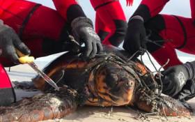 [VIDEOS] Incredible seal and turtle rescue at Noordhoek Beach