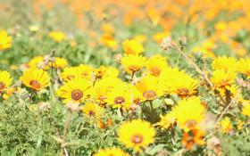 GALLERY: West Coast wildflowers put on bloomin' brilliant display