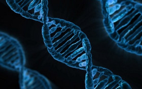 All humans are 99.9% alike, DNA study reveals