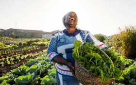 Nation Building Top Tips – Supporting Farmers