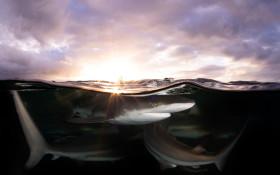 SA photographer Allen Walker wins international award for his shark photography