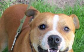 Help the Garden Route SPCA