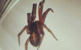 Don't fret over spiders, they are harmless - expert