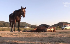 Dramatic horse feigns death whenever someone tries to ride him