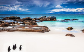 Selfie-obsessed tourists threaten survival of Boulders Beach penguin colony