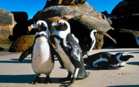 SA locals get price cut for entry to Cape Point and Boulders starting November
