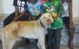 Local Philippi boys rescue this labrador and Animal Welfare wants to help them