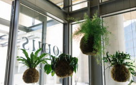 [LISTEN] Help Opus Botanical Florist & Design Studio survive lockdown