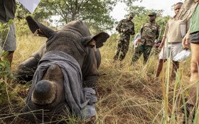 Conservationists concerned about resurgence in rhino poaching under level 1