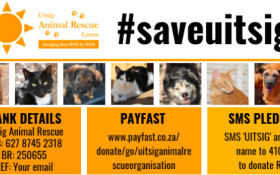 Please help Uitsig Animal Rescue keep its doors open