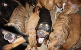 [PHOTOS] Woman takes 97 dogs into home during Hurricane Dorian