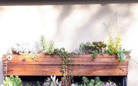 Constantia Open Gardens 2019