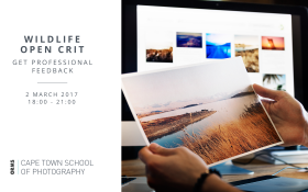 Wildlife Photography Open Crit Session
