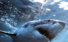 Shark spotted at Fish Hoek Beach