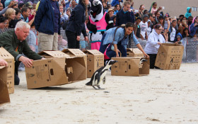 SANCCOB African Penguin Awareness Day Festival