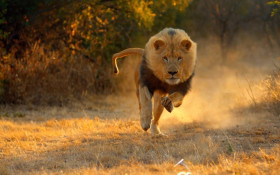 Inside Lions' Hunting Behaviour with Cape Union Mart & Wild Magazine