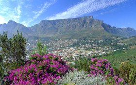 Cape Town tourism rakes in impressive numbers over festive season