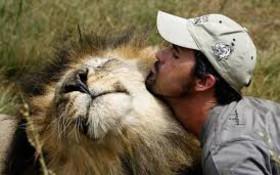 Lion Whisperer hugs big cats