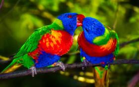 World of Birds sanctuary faces shut down