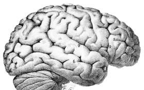"Managing the ""Three Brains"""