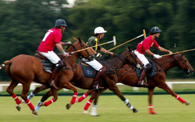 Polo invitational in Paarl a first of its kind
