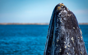 It's whale season! 'Whether you see 5 or 500 – it's an amazing experience!'