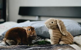 Tracey Lange needs tips to stop her bunnies from chewing through everything