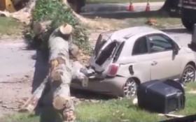 [WATCH] Eyewitness's witty account of tree falling has social media in stitches