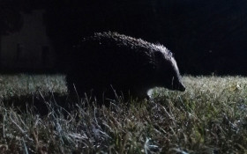 Animals are becoming nocturnal to avoid human beings