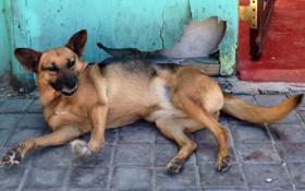 Khayelitsha animal clinic sets up winter donation drive for township pets