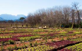 [LISTEN] How to grow your own edible urban garden