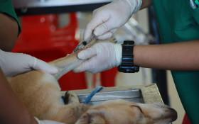 SPCA hosts virtual walk to help raise money for more life-saving surgeries