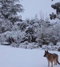 Snow turns parts of SA into winter wonderland