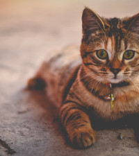 Cops drove over cat then left it to suffer and die - SPCA