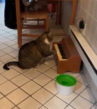 [WATCH] Winston the cat plays piano when he wants his dinner
