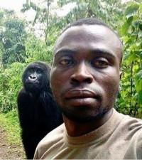 Orphaned gorillas' selfie goes viral