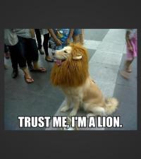 """Lion cut"" gone wrong!"