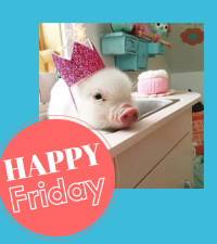 Are you as happy as Pearl the pig that it's the weekend?
