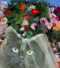 [LISTEN] Meet the creative dad of Instagram sensation 'Owl Kitty'