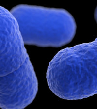 Listeriosis added to notifiable diseases list