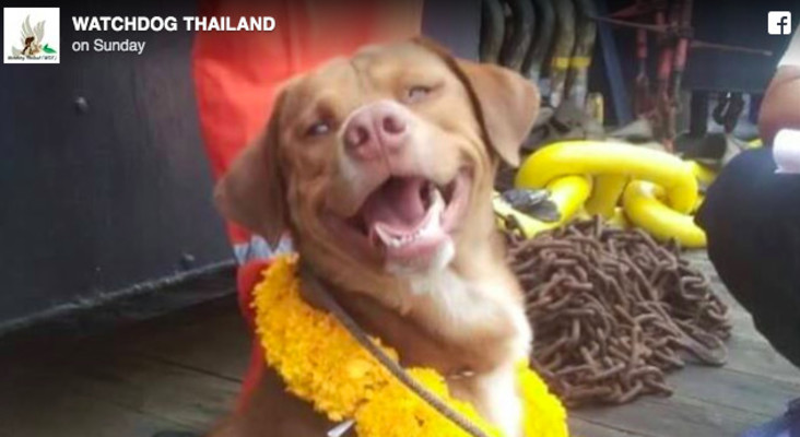 [WATCH] Oil riggers rescue pooch 200 kms out to sea