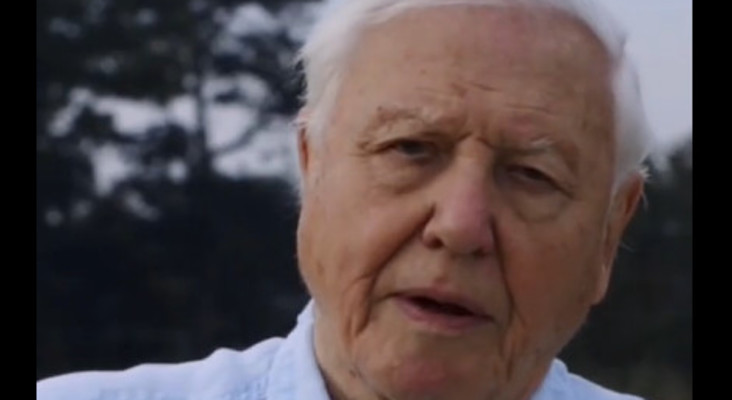 [WATCH] 'The World is in trouble' Sir David Attenborough joins Instagram at 94
