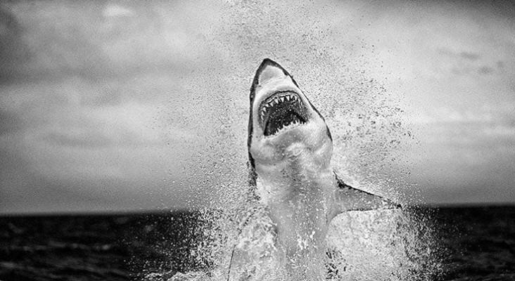 Photographer Chris Fallows describes taking award-winning image of shark breach