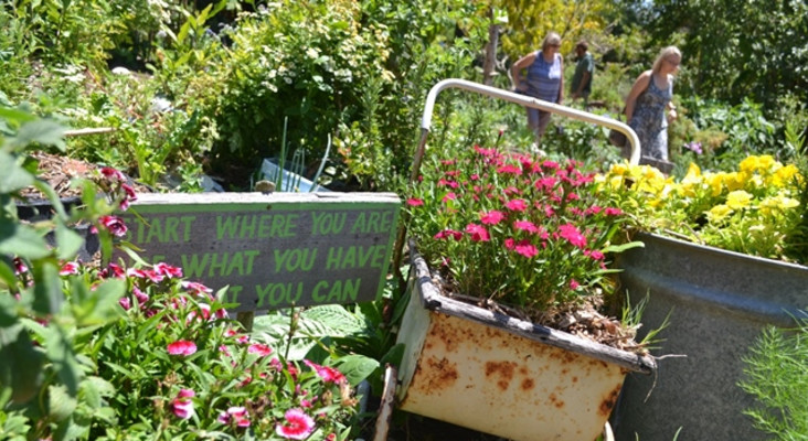 Keeping your garden green in the midst of drought