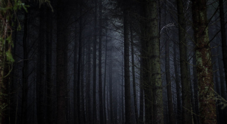 You're walking through a creepy forest... Are you a psychopath? Take the test