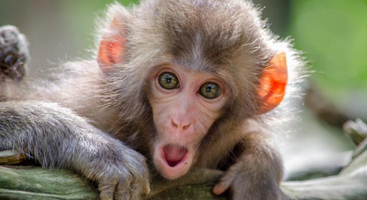 Whackhead's Prank: No more monkey business